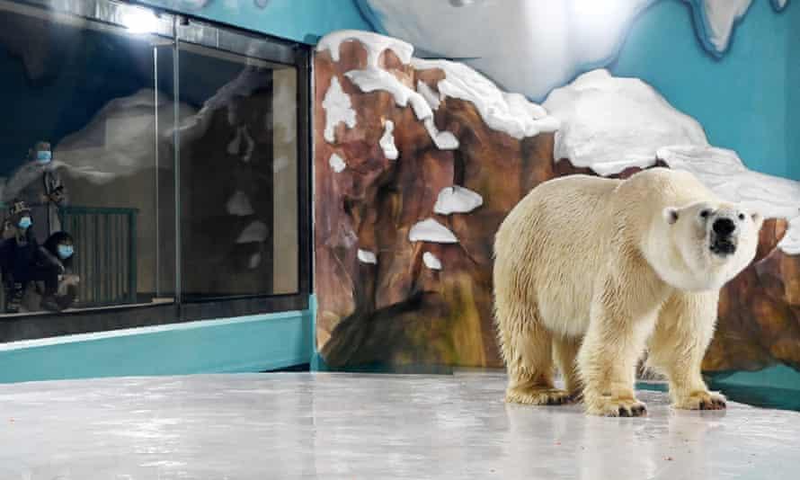 Polar bear near glass viewing window