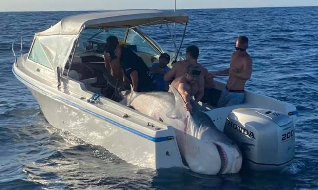JAW DROPPING Massive 900lbs mega shark caught as fishermen haul beast onto tiny boat after 45-minute battle