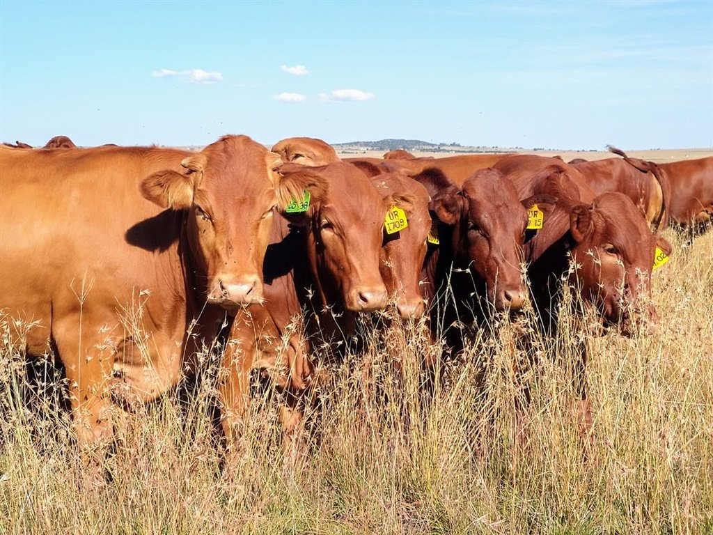 An education official is accused of stock theft.
