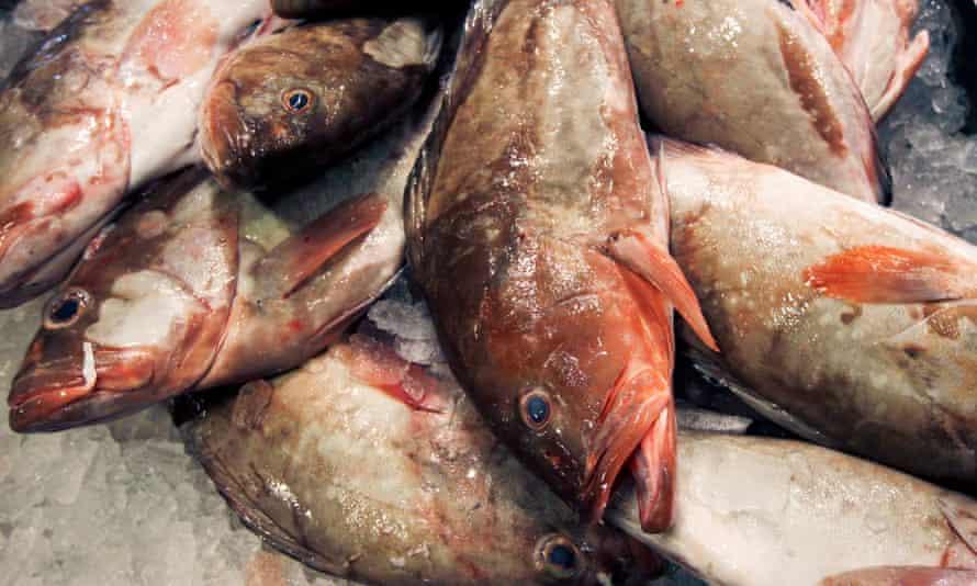 New York fish wholesaler