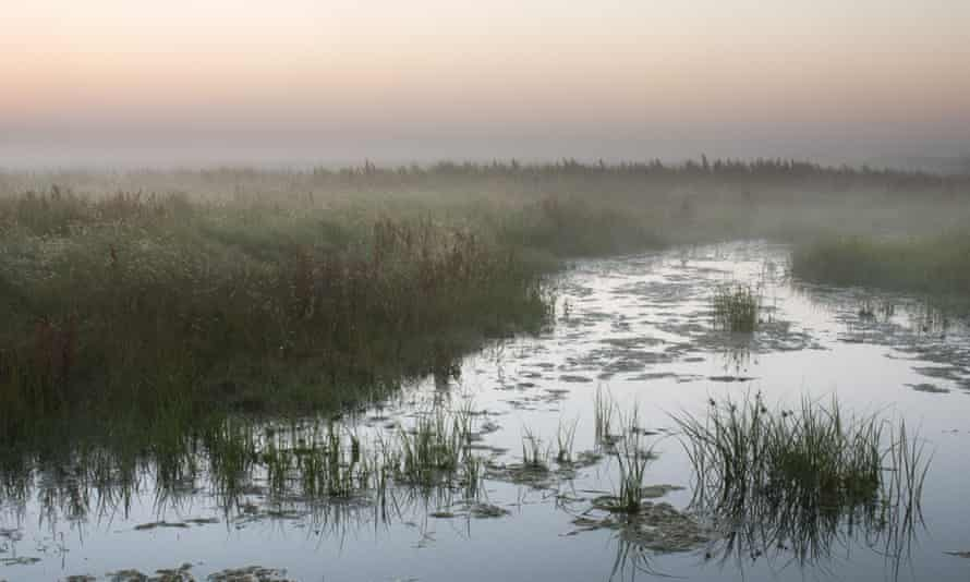 View of a ditch in coastal grazing marsh habitat at dawn in Elmley Marshes National Nature Reserve, Isle of Sheppey Kent, UK.