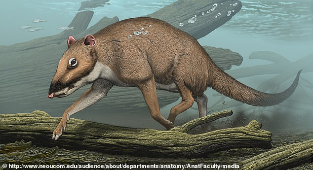 The largest animal on Earth swims through the depths of the oceans, but 50 million years ago whales walked the surface on four legs. A professor at Northeast Ohio Medical University reveals the massive creatures are descendants of an ancient 'little deer,' known as Indohyus