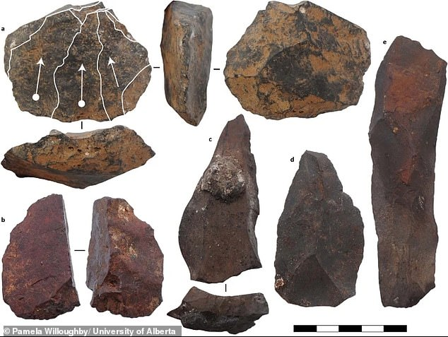 Wilkins' team ascertained the chronology of stone tools (pictured) and other items at Ga-Mohana Hill North Rockshelter using luminescence dating, which measures natural light that accumulates in minute grains of quartz and feldspar