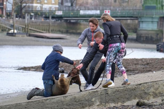 People trying to pull a dog off of Freddie the seal. The Government has partnered with Seal Alliance to issue new guidance about giving seals space.