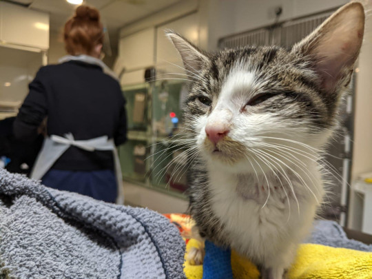 marco the kitten who sadly died after being taken from his mum too soon