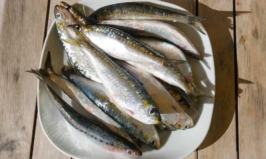 Sardines are plentiful in the surrounding sea.