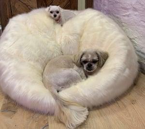 Paris Collingbourne's dogs