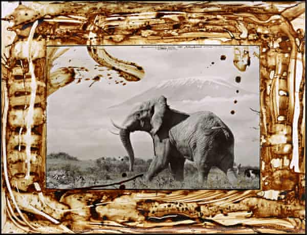 Grey giant … a live elephant in a shot titled The Snows of Kilimanjaro, Mountain of Caravans, 1984/2008.