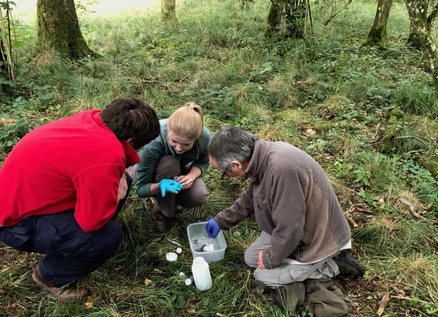 Carrion beetle survey at Great Ridge Wood