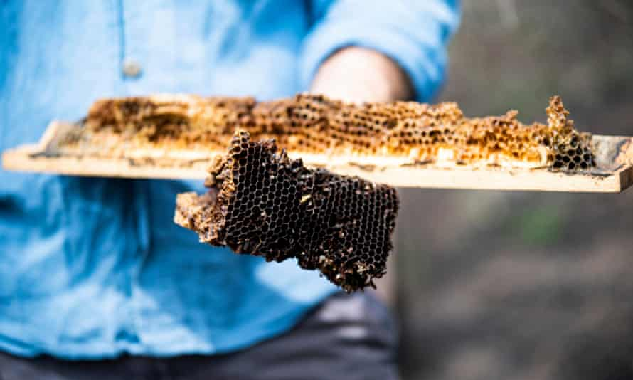 'If you treat them nicely, they tend to be very tolerant of us,' says beekeeper Adrian Iodice.