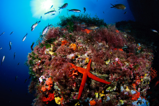 Formentera is passionate about preserving its marine life