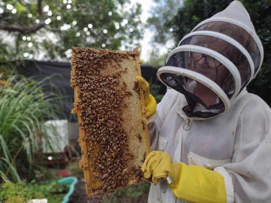Jennifer Johnston looks over a frame of honeybees belonging to BrissyBee