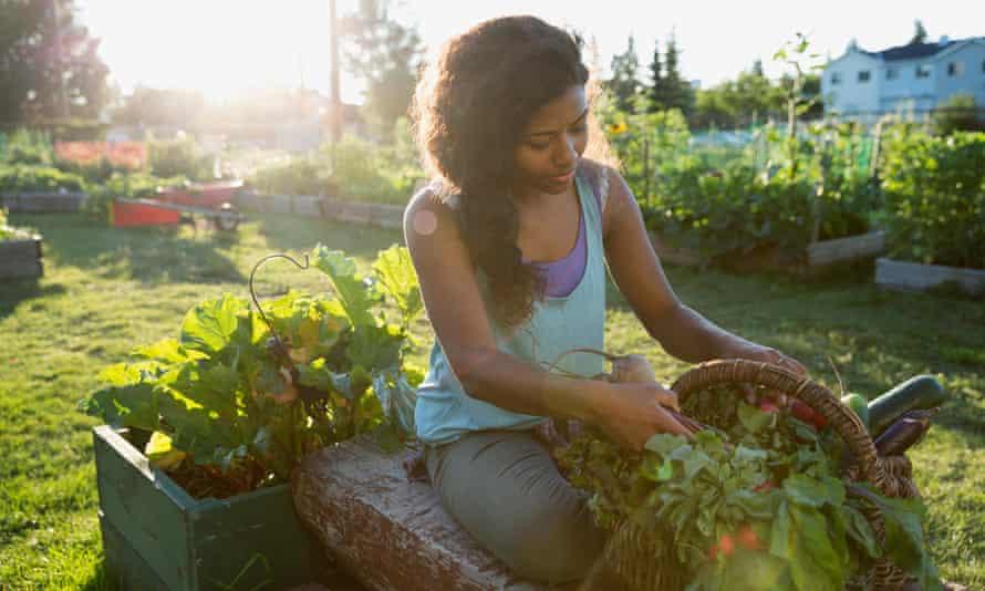 Woman harvesting vegetables in garden