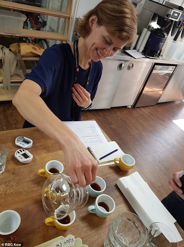 Tasting Stenophylla at Union Coffee in London.Based on protocol of the Specialty Coffee Association, the panel awarded the coffee 80.25 out of 100 – defined as a 'speciality score'