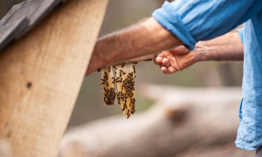 Adrian Iodice tends to his bees. The honey industry reported at least 2.5bn honeybees in NSW and Victoria alone were killed in the fires.
