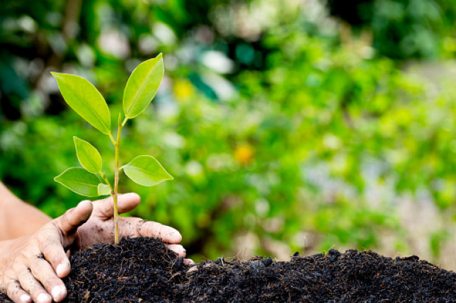 A pair of hands plants a small green leafed plant into a bed of dirt on a sunny day.