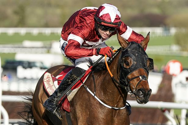 Tiger Roll will miss the chance of a third successive victory at Aintree