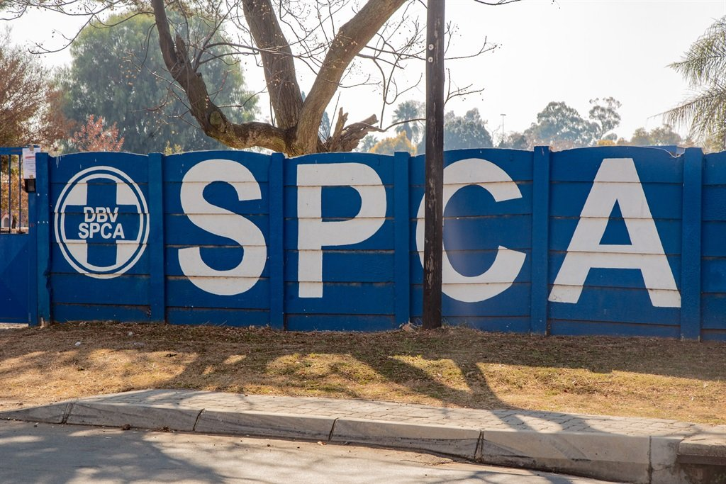 The SPCA warned residents not to eat their domestic chickens if they died. (Photo: OJ Koloti/Gallo Images)