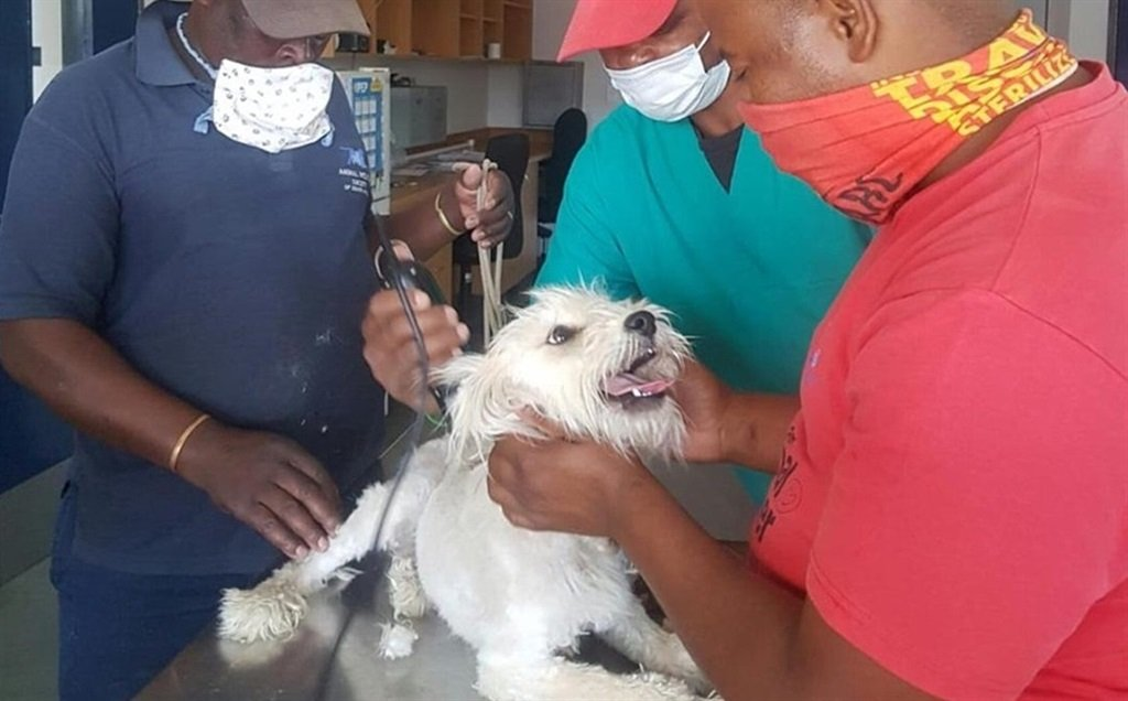 Rasta the dog gets a makeover and new family