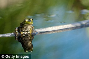 Some animals, including frogs, rely on the starry sky to navigate at night (file photo)