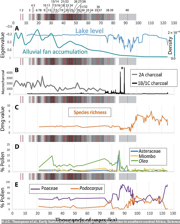 Pollen records showed a disruption in the cycle some 86,000 years ago. Researchers discovered that when wetter periods returned to the region water levels stabilized, but forests along the shore did not recover. There was also a spike in charcoal deposits around the same time as when ancient humans first moved into the region
