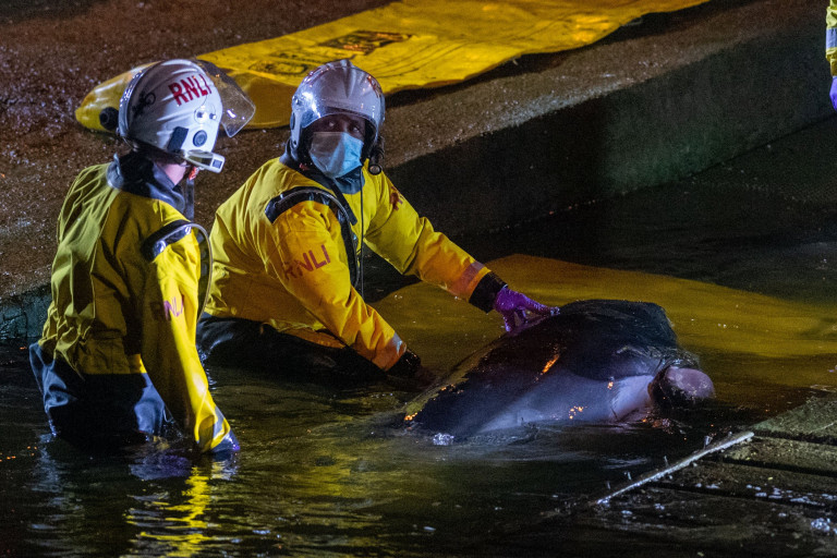 Emergency services attempt to rescue a trapped whale at Richmond Lock and Weir.