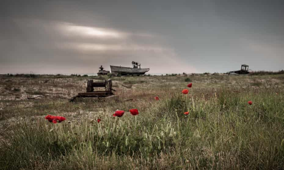Poppies growing at Dungeness among old boats and machinery.
