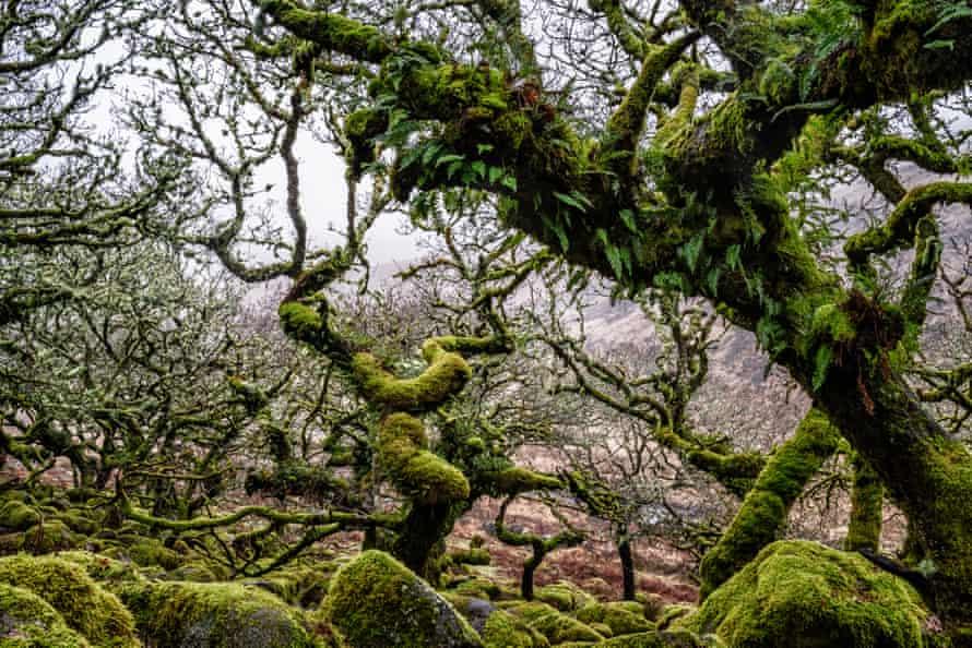 Wistman's Wood, Dartmoor, UK, in January 2020.