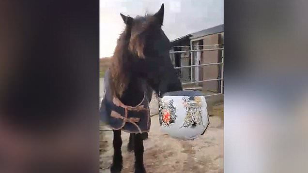 Freddie the horse branded 'UK's naughtiest pony'