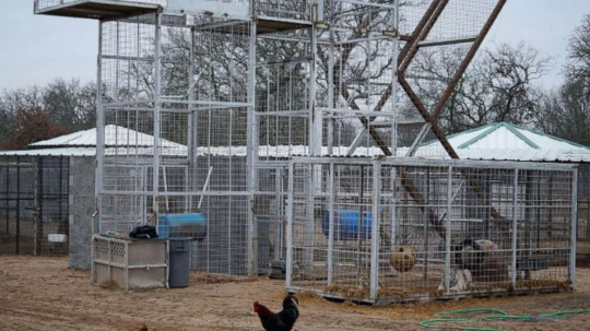Police seize 68 big cats from Tiger King star Jeffrey Lowe's animal park
