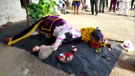 Video grab from footage of thousands of people gathering for the funeral of a horse, Karnataka, India. May 23 2021. See SWNS story SWOChorse. This footage shows thousands of people in India apparently breaking Covid restrictions to attend a funeral - for a HORSE. Reports say 2,000 people were shoulder to shoulder and without masks at the funeral of the animal in Southwest India on Sunday (May 23). Mourners walked in procession following the vehicle carrying the female white horse in a clear breach of lockdown in Karnataka state. It comes on the same day that Covid-19 deaths hit their highest daily record of 626 in the state, and the village has been closed off as a consequence.