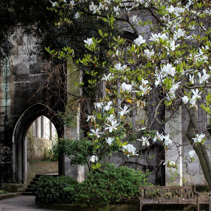 ... and the ruins of St Dunstan in the East, now a public garden
