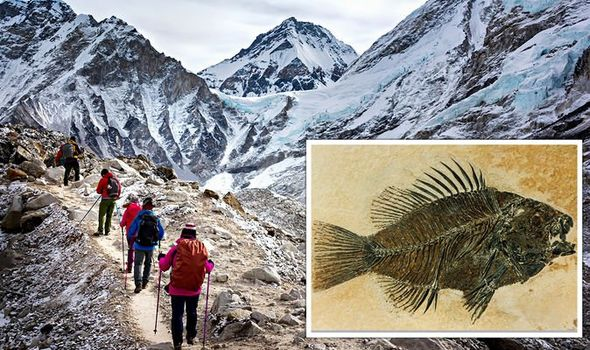 Fossilised fish remains are said to have been found