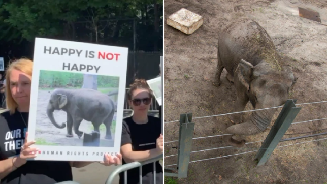 An image of animal rights activists rallying for Happy the elephant (left). An image of Happy the elephant at Bronx Zoo (right).
