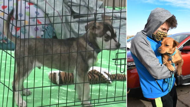 An image of a dog in a cage (left). An image of a man with a mask holding a dog (right).