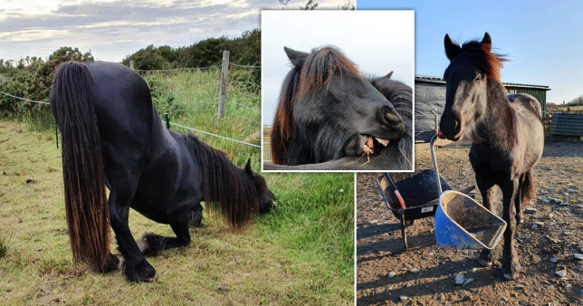 freddie the naughty pony