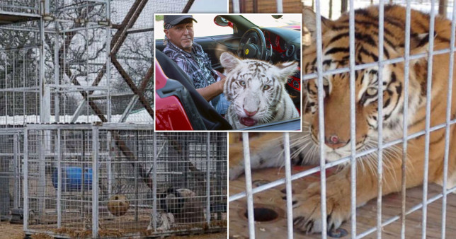 Jeffrey Lowe has been ordered to hand over the big cats to the authorities