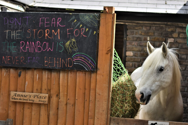 Riding charity for disabled children still evicted after raising ?1 million park lane stables metrograb