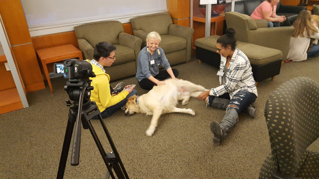 Stroking a dog regularly can 'significantly' reduce anxiety and boost thinking skills in students Picture: Washington State University