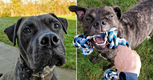 pictures of bob the dog who's waiting to be adopted