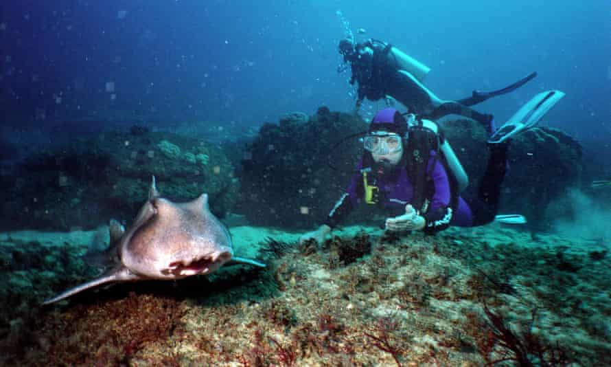 Dr Sylvia Earle diving at Magic Point, off Maroubra, near Sydney, Australia, with a Port Jackson shark in 2004