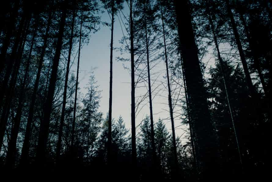 Night falls in woodland near Dartington, Devon