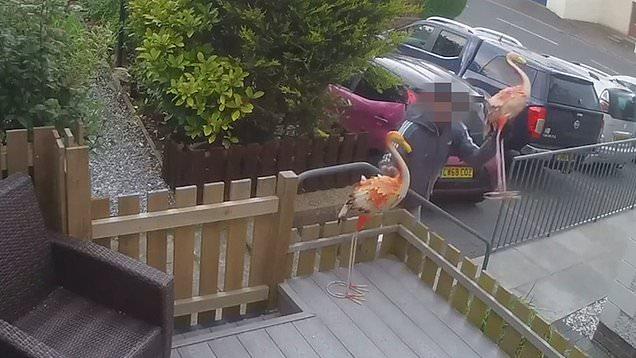Man steals pink flamingo ornament from garden in Dunfermline