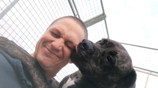bob the dog, who's a black Presa Canaria cross, licking the face of someone caring for him with the RSPCA