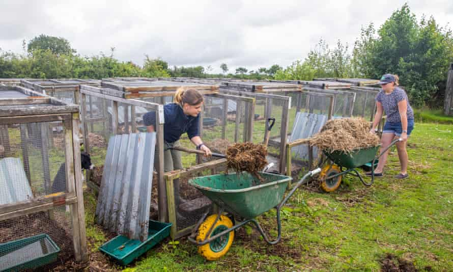 Farm workers cleaning out the water vole cages.