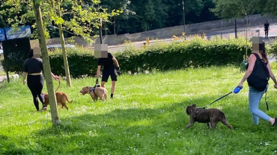 Blind family dog dies in park after being mauled by three vicious Pitbull Terriers leaving mum and daughter traumatised credit: Sonia Faleiro