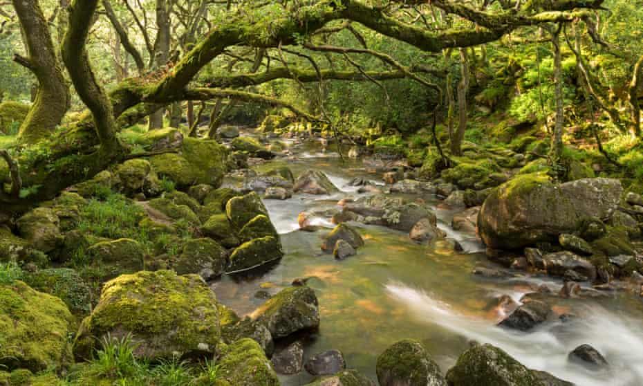 Fantastic walking on tap… The Ring of Bells, Dartmoor.