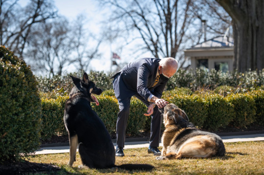 President Joe Biden plays with the Biden family dogs Champ and Major Wednesday, Feb. 24, 2021, in the Rose Garden of the White House. (Courtesy Photo by Ana Isabel Martinez Chamorro) This official White House photograph is being made available only for publication by news organizations and/or for personal use printing by the subject(s) of the photograph. The photograph may not be manipulated in any way and may not be used in commercial or political materials, advertisements, emails, products, promotions that in any way suggests approval or endorsement of the President, the First Family, or the White House.