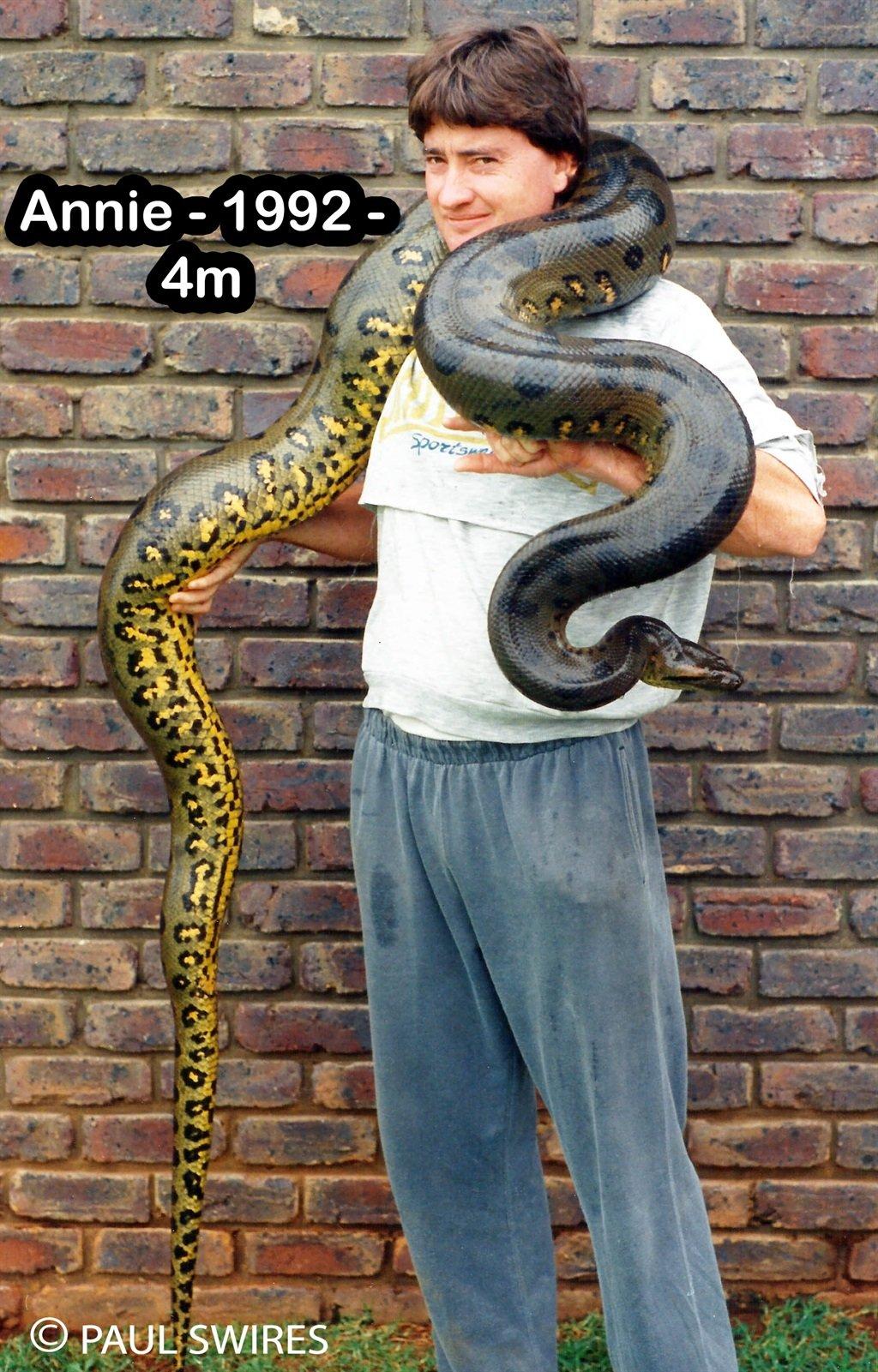 Annie the anaconda weighs over 40kg
