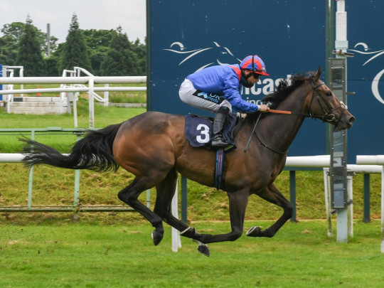 Flurry of punters back Dubious Affair at the races